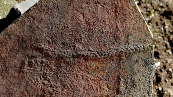 los fosiles desenterrados son el signo mas convincente de la antigua movilidad animal que se remonta a unos 550 millones de anos