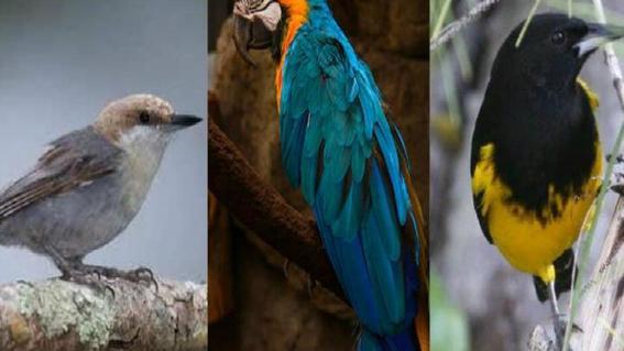 aves bahamas huracan dorian