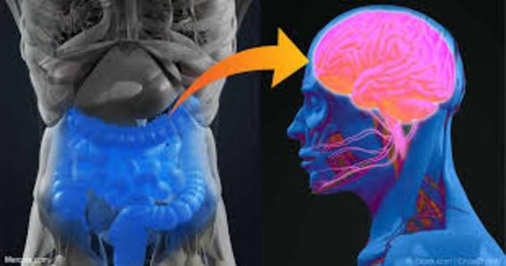 un nuevo estudio sugiere que podria existir una relacion entre las bacterias del intestino con padecimientos relacionados con la presion arterial
