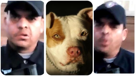 policia mato a balazos a perro raza pitbull nogales sonora