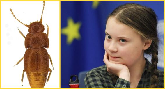 cientifico nombra greta thunberg a insecto que descubrio