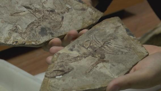 descubren antepasado perdido del primer animal que camino en la tierra