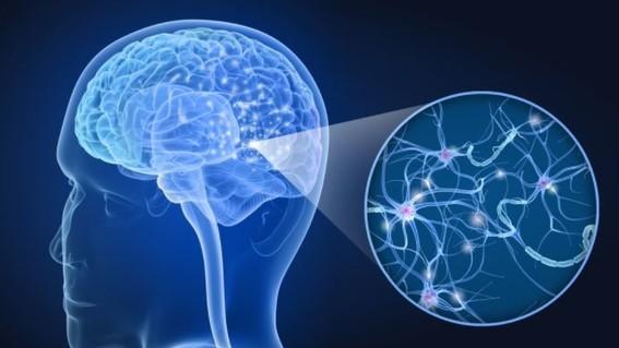 la molecula alcam podria conducir al desarrollo de una nueva generacion de terapias para el tratamiento de esta enfermedad autoinmune