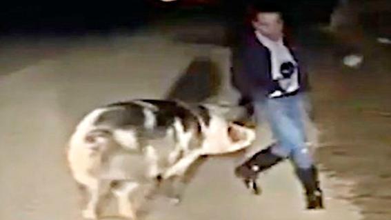 video cerdo reportero atenas grecia transmision en vivo