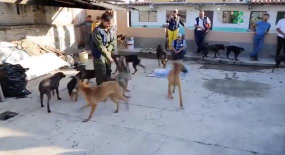 la paot dio a conocer que con ayuda de ciudadanos y asociaciones protectoras de animales pudo colocar en hogares a 53 perros