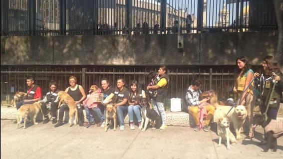 cada ano los fieles olvidan a los mas fieles los perros quienes terminan abandonados a su suerte en las inmediaciones de la basilica