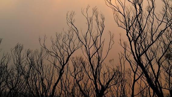 el cambio climatico a traves del aumento de las temperaturas y los cambios en los patrones de lluvia ha creado las condiciones propicias para i