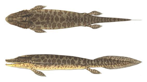 mediante una tomografia computarizada se logro examinar la forma y estructura de los rayos de las aletas de peces fosilizados