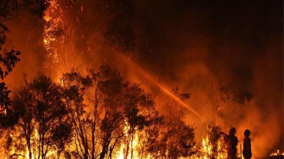 los incendios que han ocurrido en australia desde el pasado mes de septiembre se han cobrado las vidas de unos 480 millones de animales
