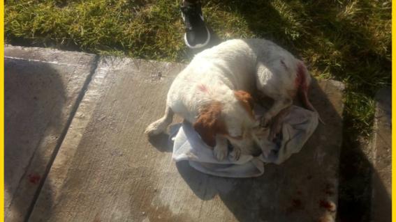 violan a un perrito en municipio de jalisco