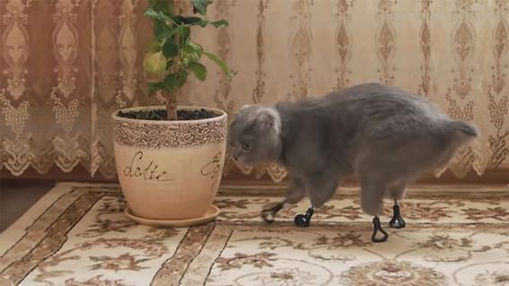 gatita vuelve a caminar gracias a protesis hechas con impresora 3d