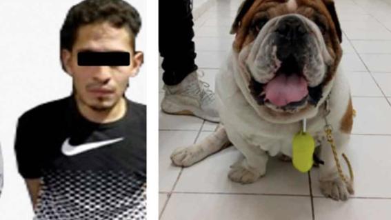 liberan a sujeto que robo a perro emilio bulldog roma norte