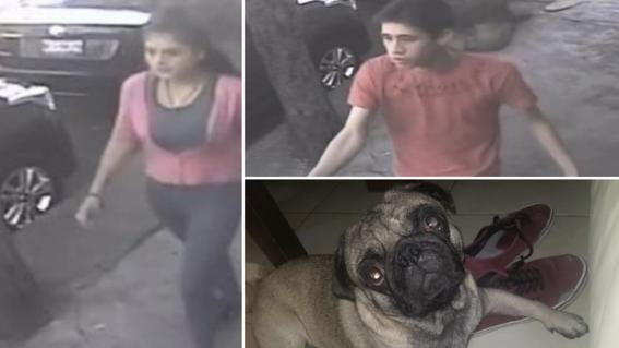 secuestro perro pug mafioso azcapotzalco