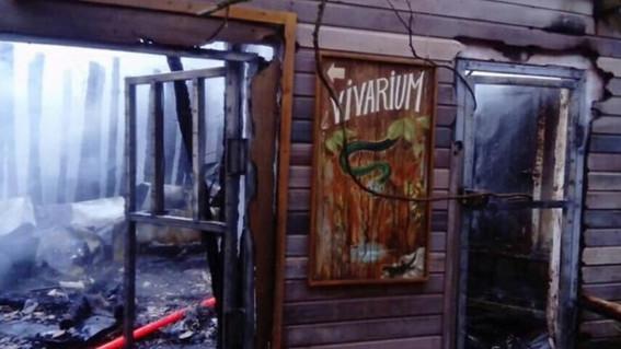 el incendio en el zoologico de la flèche provoco la muerte de 50 murcielagos y otros cinco reptiles diversos
