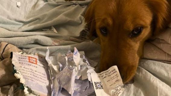 perra salva a duena de coronavirus come pasaporte taiwan