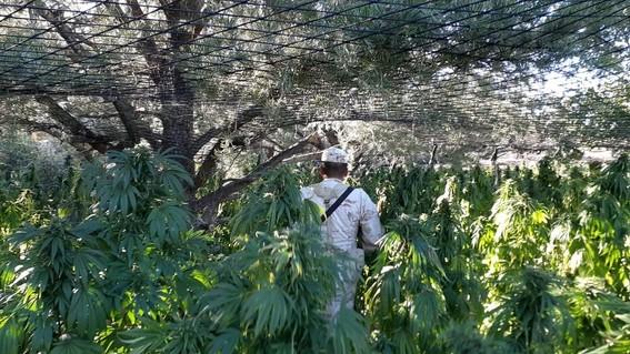 tecnologiapermitedetectarplantiosdrogaespaciomexico