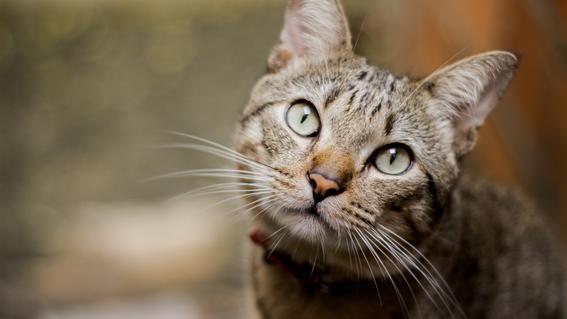 gato salva de incendio a mujer mayor de edad rusia