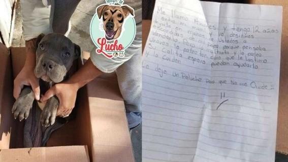 perro adopcion maltrato animal ciudad hidalgo michoacan