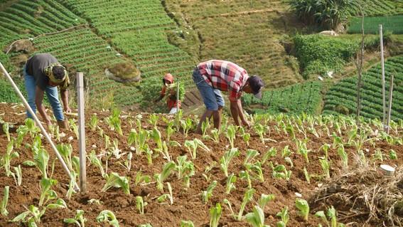 empleo trabajadores agricolas agricultura jornaleros