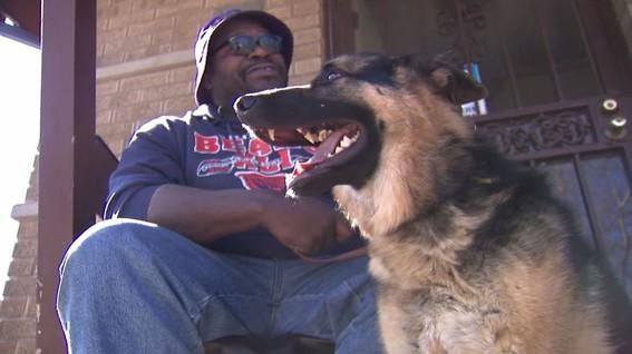 roban perro guia a ciego chicago illinois