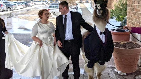 Llevó una llama con esmoquin al casamiento de su hermana
