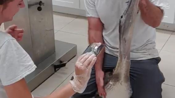 extraen celular a pelicano comida florida estados unidos