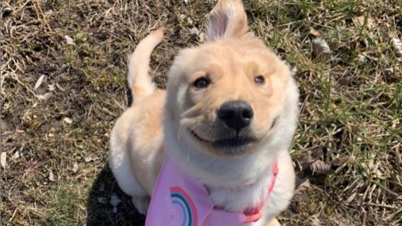 perrocornio perro unicornio rae unicorndog
