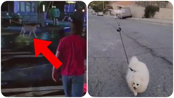 perro paseo drone chipre redes sociales
