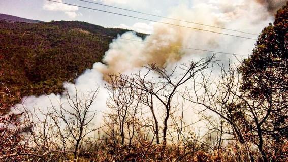 oaxaca enfrenta incendios forestales coronavirus covid19
