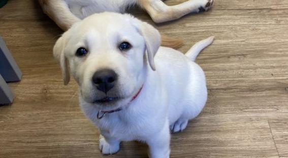 los perritos buscan ser parte fundamental de la deteccion de pasajeros contagiados que tengan sintomas