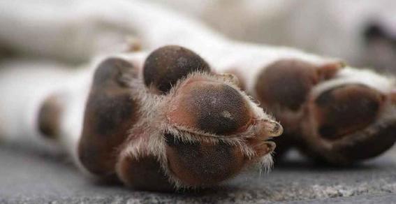 perritos aparecen decapitados en terraceria de puebla