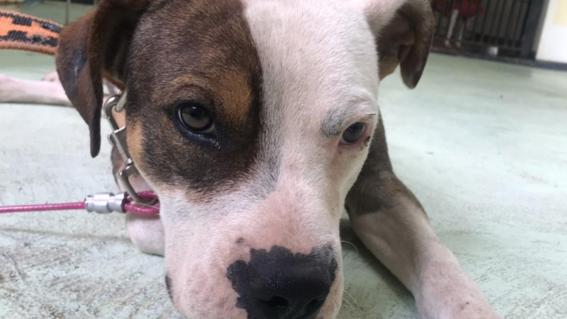animal dj fest 2020 el evento virtual para adoptar perritos rescatados en el metro