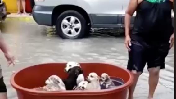 familia rescata perros reynosa tamaulipas