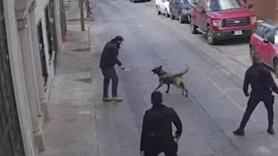 apunalan a perro policia zacatecas