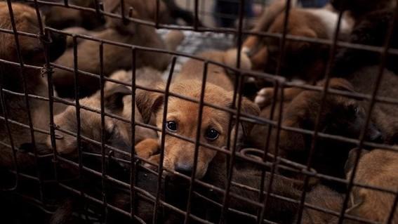 kim jong un confisca perros a norcoreanos para venderlos en carnicerias