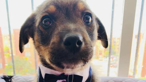 vicente perro adopcion colombia