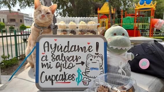 gato vende cupcakes cirugia ojo cdmx