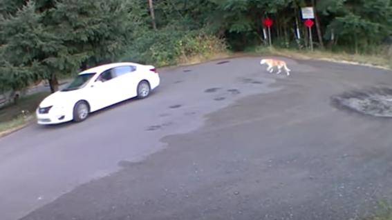 video mujer abandona a perro en bosque vancouver