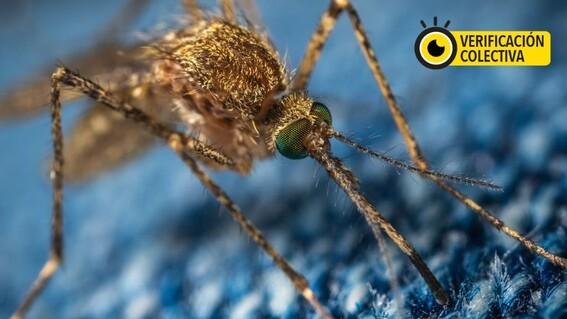 diferencias entre covid19 y dengue
