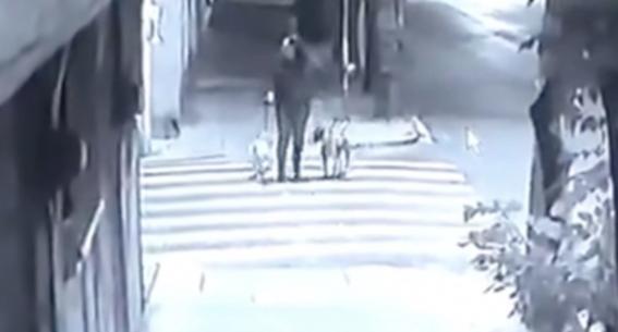 video muerte perro ramon atacado por pitbull y rottweiler en gam cdmx