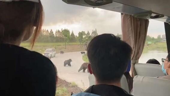 osos parque china ataque