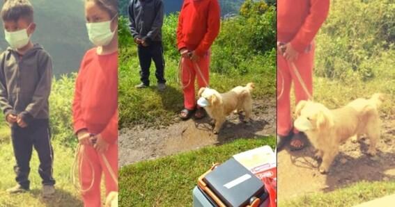 foto ninos le ponen un cubrebocas a su perro en guatemala y se vuelve viral