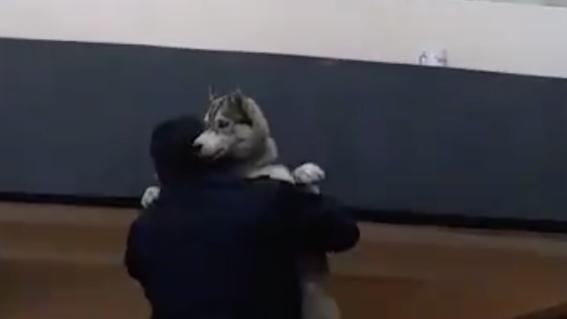 salvan a perro husky incendio cdmx