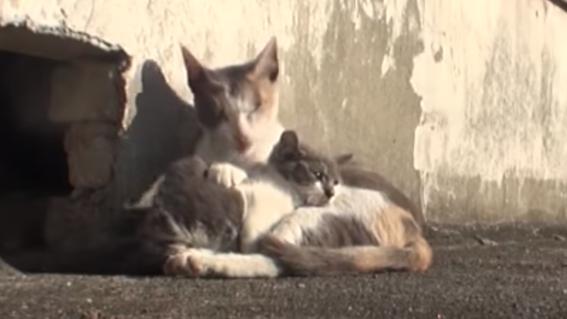 madre gata cuida a cria con discapacidad