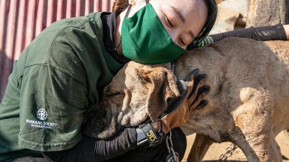 rescatan perros de granjas de carne en corea del sur