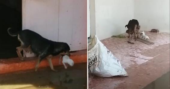 perra salva crias inundaciones tabasco