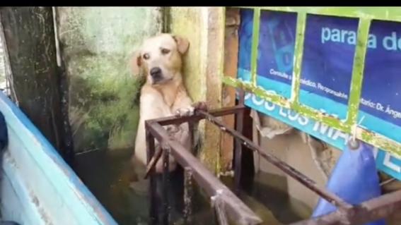 video rescata marina a perro de la inundacion en tabasco