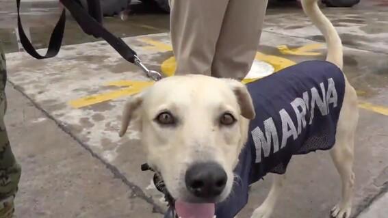 sera parte de la marina el perrito rescatado en inundaciones de tabasco