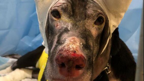perra prenada salva a pacientes rusia