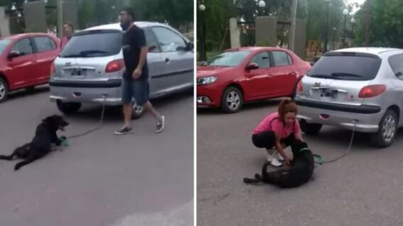 perro arrastrado por 7 cuadras por mujer tunuyan mendoza argentina